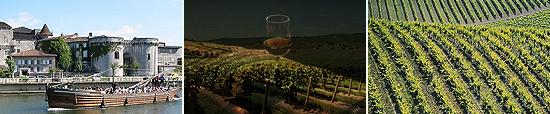 bordeaux - vineyards